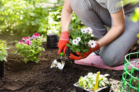 Garten und Pflanzen auf Rechnung kaufen